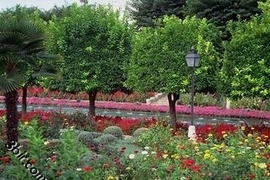 صور اشجار ونباتات ونخيل رائعه وجميله