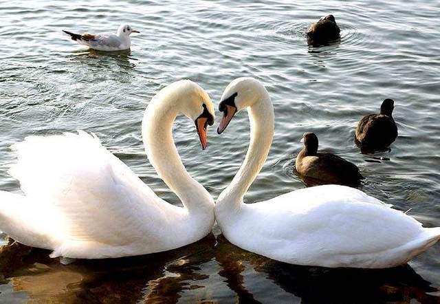 صور حيوانات رومنسية - صور حيوانات