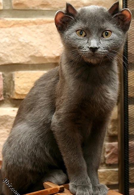 صورة قطه غريبه