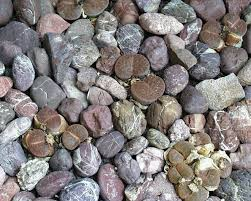 ليست أحجار بل هي نبات حي