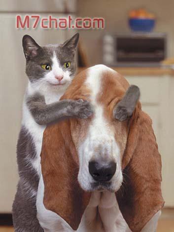 القطه والكلب - صور نسائية