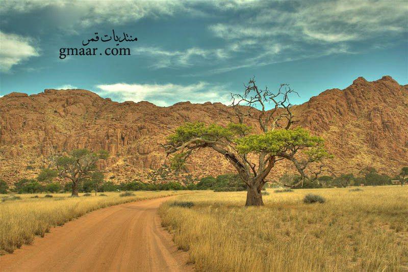 www.gmaar.com/vb - صور غريبة