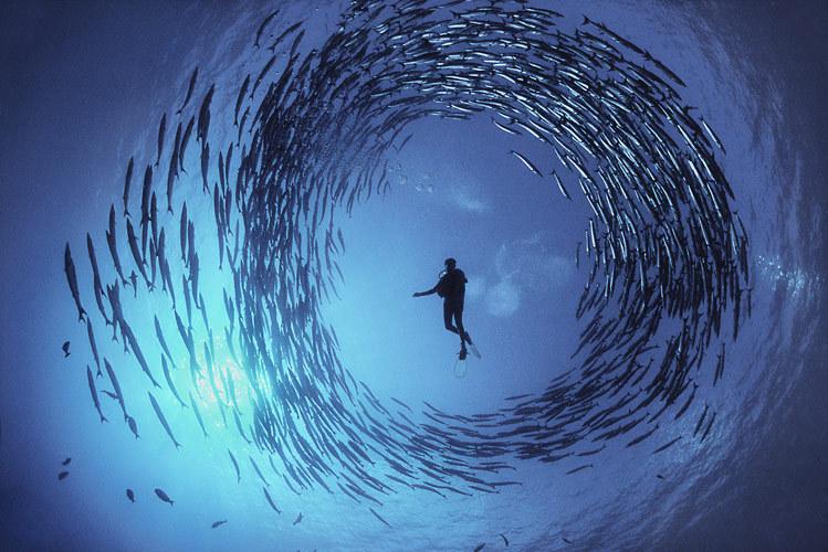 حياة البحار - صور غريبة