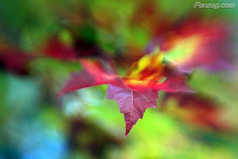 ورود طبيعه - صور ورد