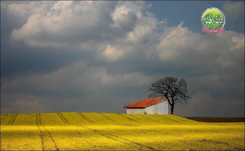 حقول القمح حول العالم - صور غريبة