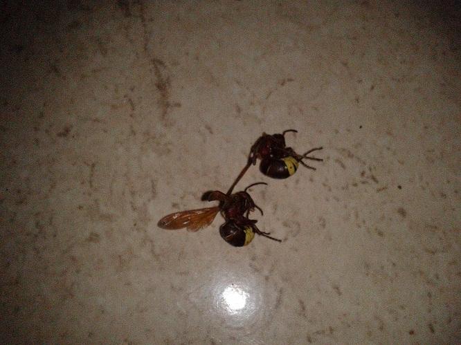 دبور ميت<مدونتي - صور حيوانات