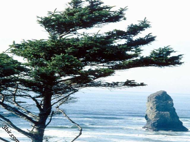 صور شواطئ كورنيش