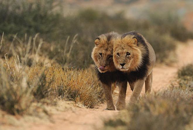 تصوير جنوب افريقا - صور غريبة