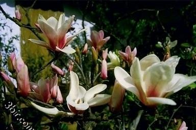 مكتبة صور الورود والزهور ورد طبيعي زهور جميلة الجزء الاول