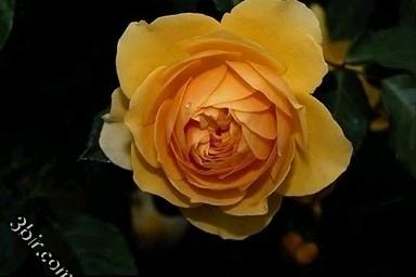 مكتبة صور الورود والزهور ورد طبيعي زهور جميلة الجزء الثالث