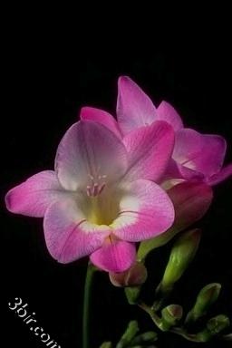 مكتبة صور الورود والزهور ورد طبيعي زهور جميلة الجزء الرابع