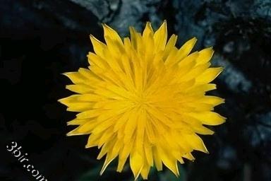 مكتبة صور الورود والزهور ورد طبيعي زهور جميلة الجزء الخامس