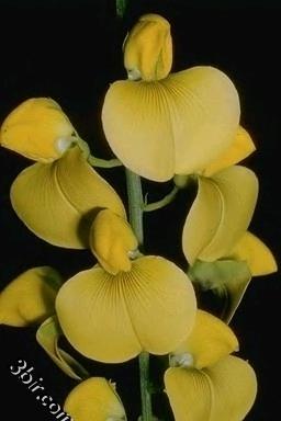 صور الورود والزهور ورد طبيعي زهور جميلة - ج 8