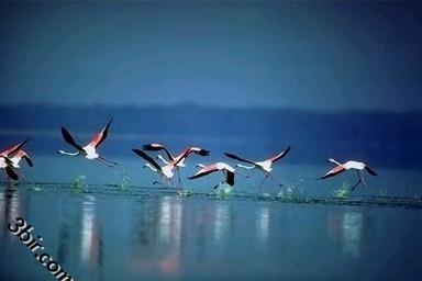 صور طيور رائعه اجمل صور الطيور صور صقور نسور ج1