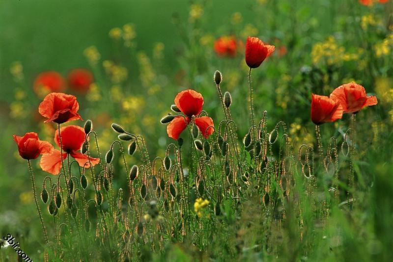 صور زهور ورود رائعه وجميله