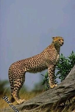 صور حيوانات صور قطط اسود زواحف نمور فيله