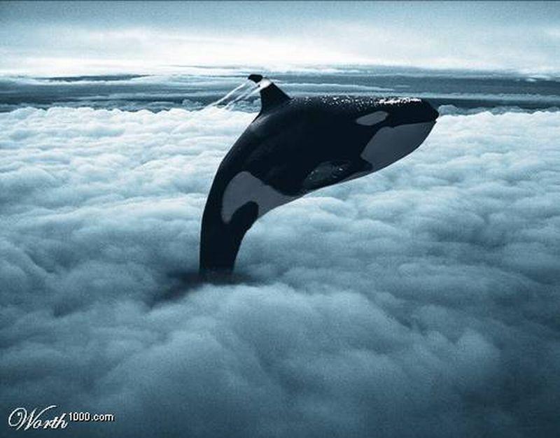 صور احلام الحيوانات