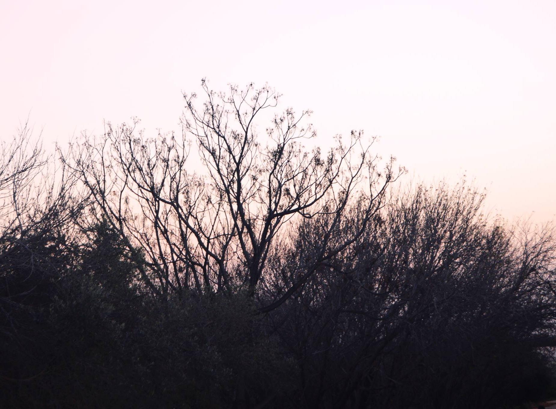عكا - صور طبيعة