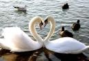 صور حيوانات رومنسية