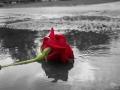 صور رومنسية ، صور ورد احمر رومنسي