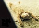 محاكمة حيوانات