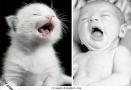 صور اطفال مع قطط
