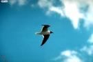 طيور طائرة