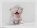 صورة قطة صغيره