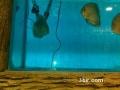 صور اسماك في حوض