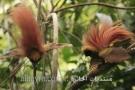 صور طيور غريبة