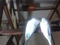 عصافير - صور حيوانات