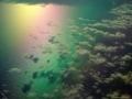 صور قوس قزح في البحر