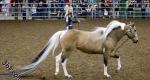 اطول ذيل حصان في العالم