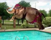 فيل - صور متنوعة