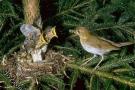 صور عش وفراخ طيور