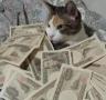 قط مليونير