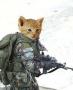 صور قطط جيشي حربي