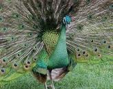 جمال وغرور - صور حيوانات